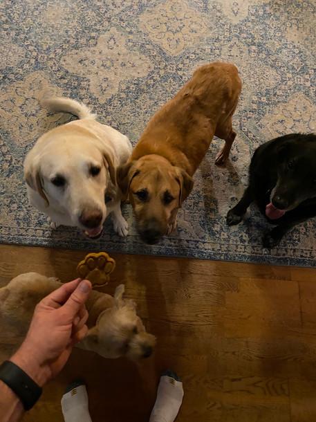 CHAMP, DUKE, JAKE and DAISY