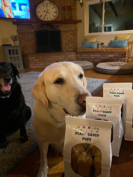 DUKE and DAISY - White and Black Labradors