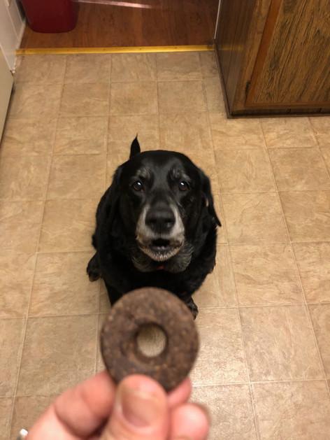 CHLOE - Black Labrador