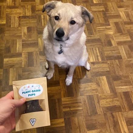 MASON - Labrador Schipperke Mix
