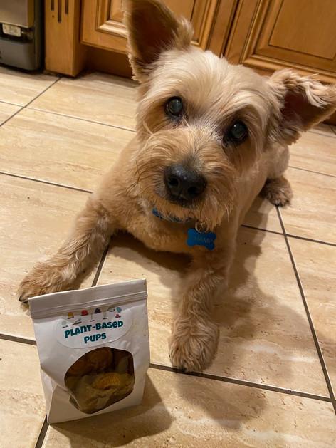 CHAMP - Cairn Terrier