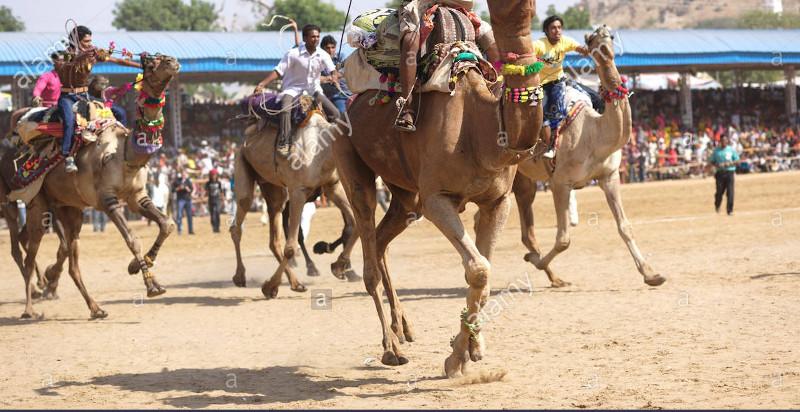 Camelkar festival