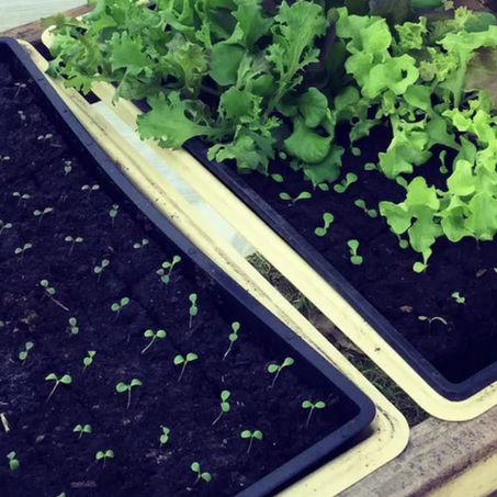 Farmette Victory Garden: Grow Lights