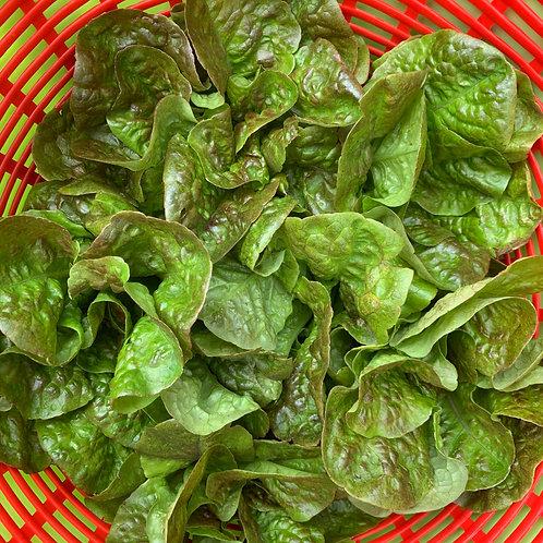 2 Mini-head lettuce Crisp head