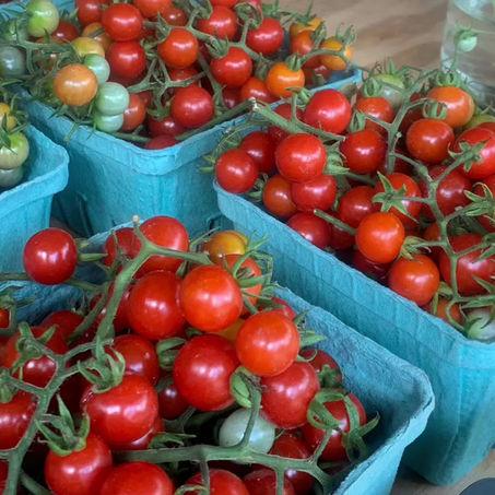 Farmette Victory Garden: Starting Seeds Indoors