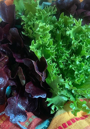 2-pack mini-head lettuce