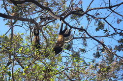 always monkeys somewhere