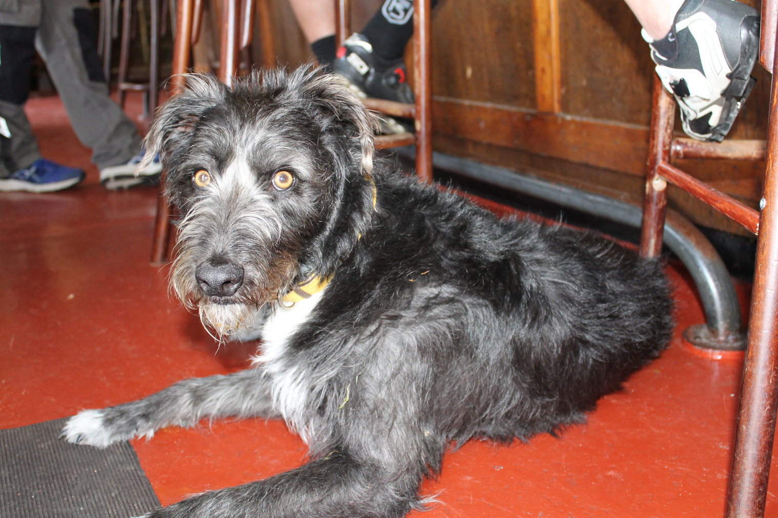 Resident Pub Dog - Otis