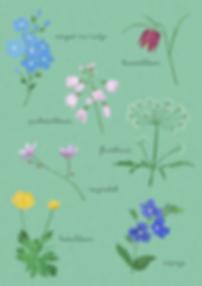 van-veelen_voorjaarsbloemen.png