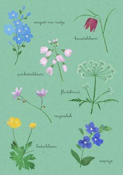 van-veelen_voorjaarsbloemen
