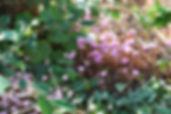 Timber Hill Garden