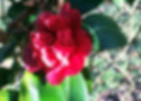 1 January flowering