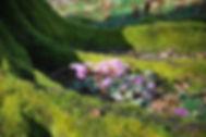 Crocus at Timber Hill