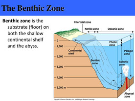 Let's Rebuild the Benthic Layer.