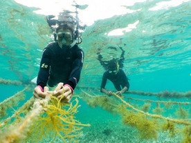 Alternatives in Aquaculture