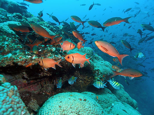 15.Ocean-Conservancy-fish-and-corals-at-