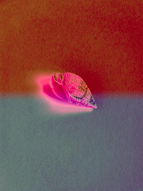 Horn shell dreams