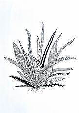 Zen plant.jpg