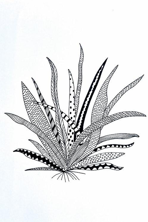 Zen plant