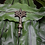 Thumbnail: Palm Tree hanger - small bronze