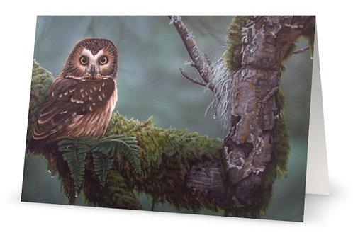 Greeting Card - Saw-whet owl - Salt Spring Island