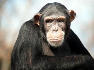 We've been treated like monkeys!