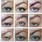 brows healing (2).jpg