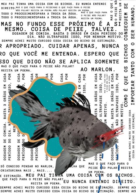 DOSAGEM DE COMIDA: BASTA 3 GRÃOS  EM CADA PERIODO DO DIA.
