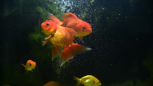 Fish - 40287.mp4