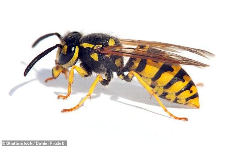 new wasps.jpg