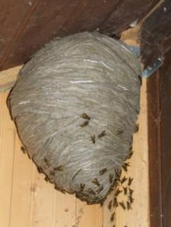 waspa nest2.jpg