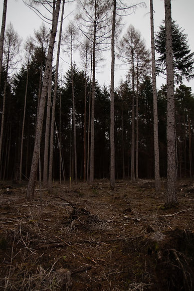 Dürre Bäume.jpeg