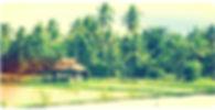 Dans Ubud, Balade le long des rizières