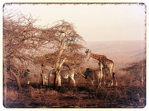 Safari, Parc Kruger