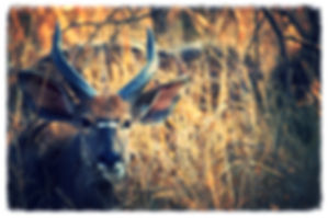 Safaris, Parc Kruger