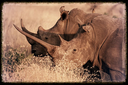 Safaris Près de Mavela Lodge