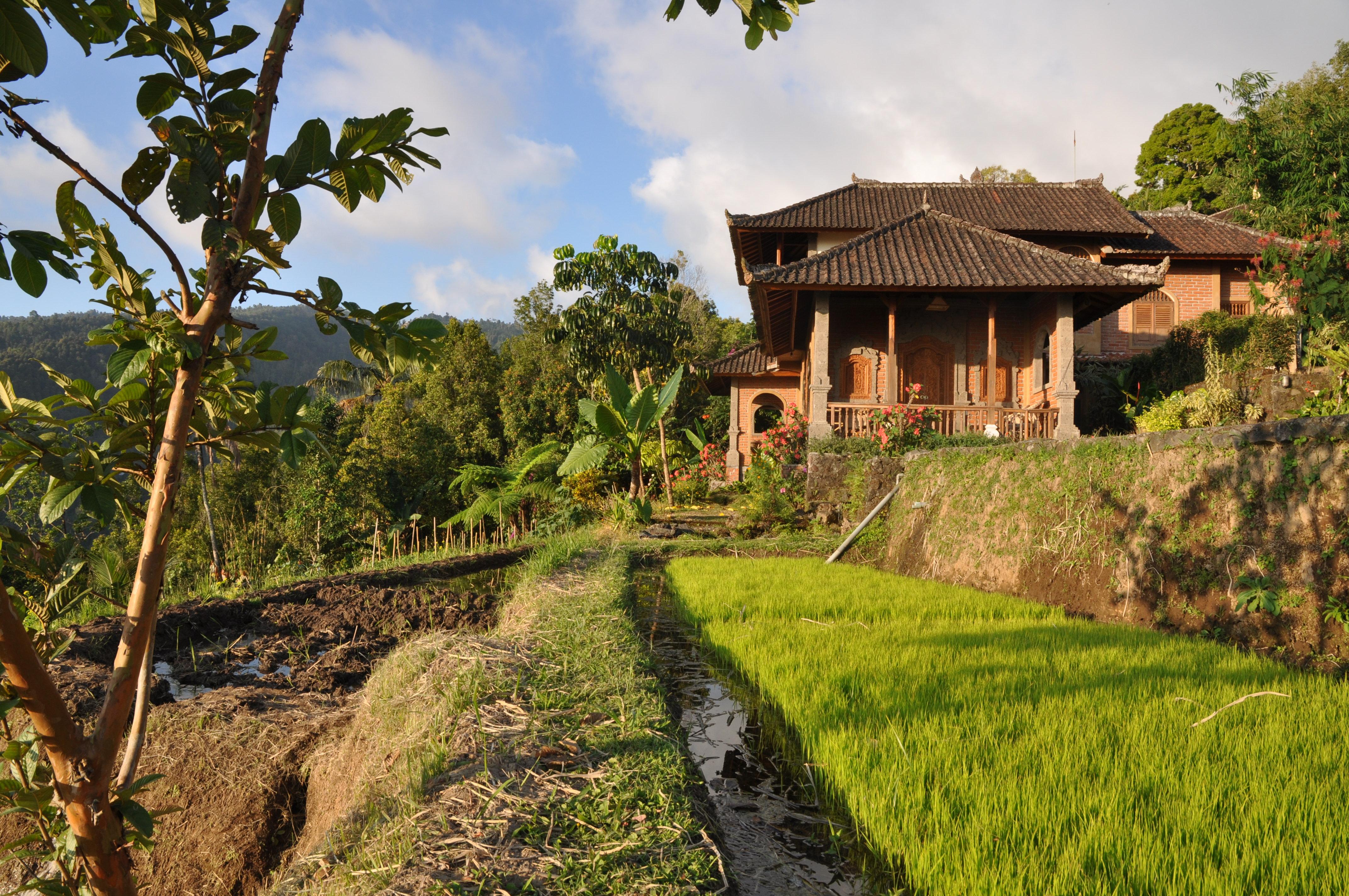 Maisons parsemées dans rizières