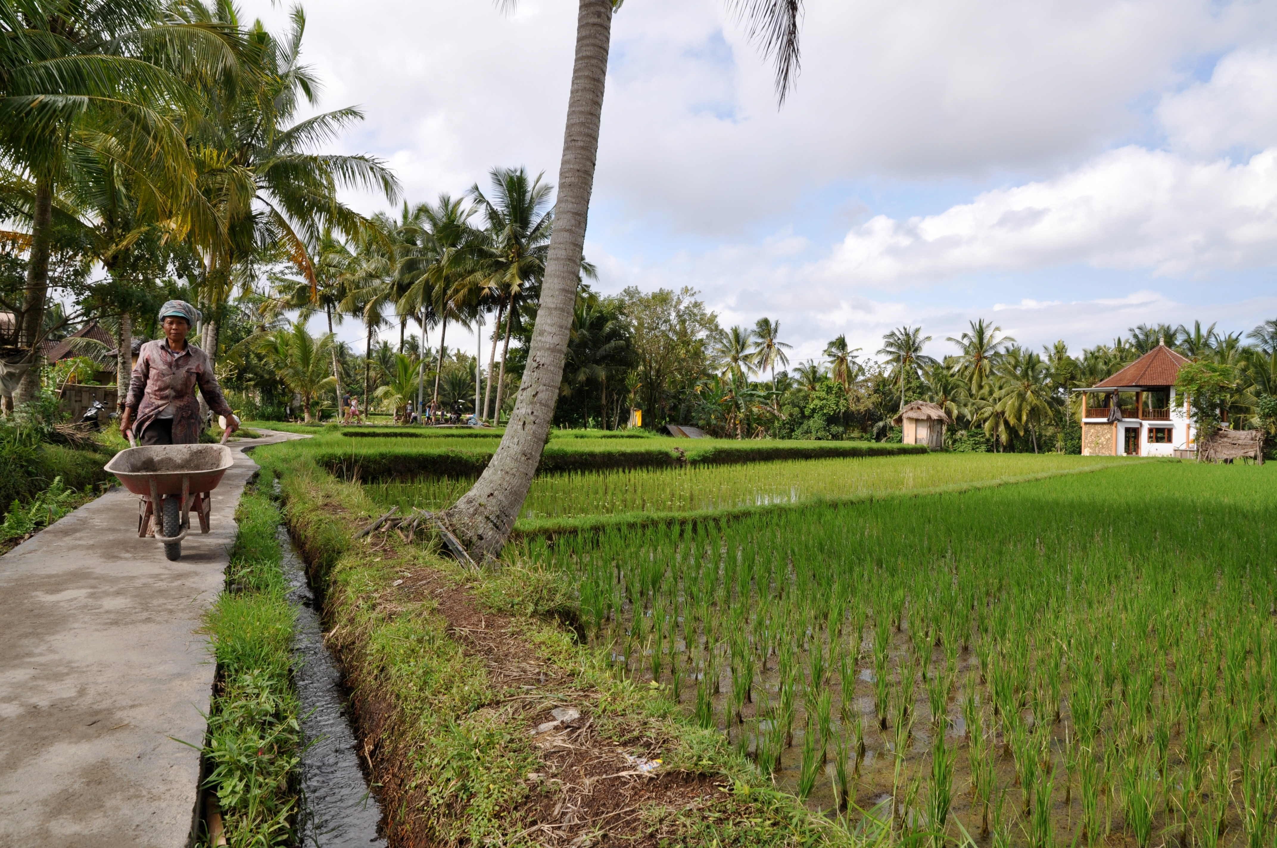 Balade à pied dans Ubud