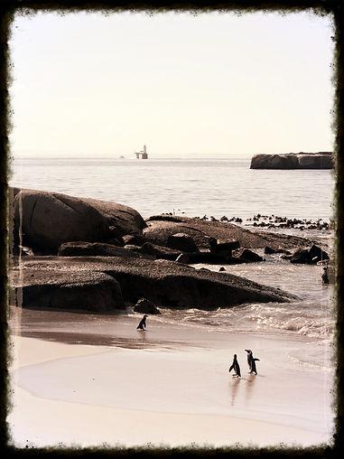 Boulders, Le Cap, Afrique du Sud
