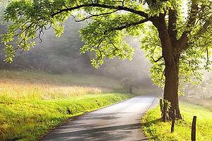 istockphoto-500891249-612x612_edited_edited.jpg
