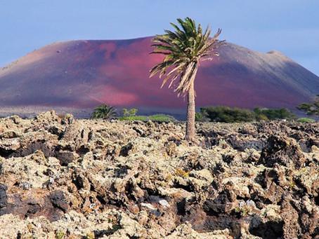 Bodegas Vinatigo - A volcanic experience