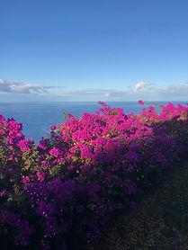 La-Palma-Blumen.jpeg