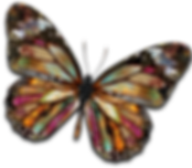 butterflysmaller.png