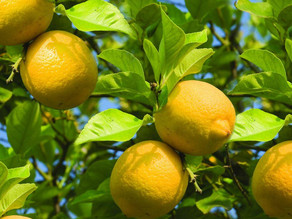 IT'S ALL ABOUT LEMON ESSENTIAL OIL