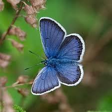 MHHL butterfly.jpg