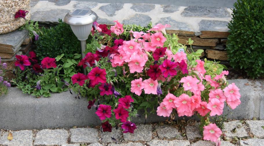 Flores no exterior