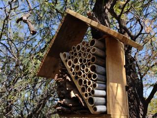 Un hotel de insectos para contribuir al medio ambiente