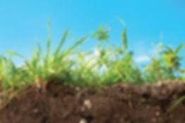 soil_feature.jpg