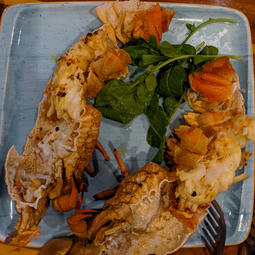 Wild caught lobster prepared for dinner