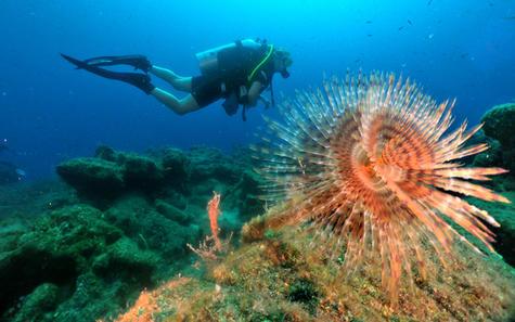 Scuba dive during blue cruise in Turkey